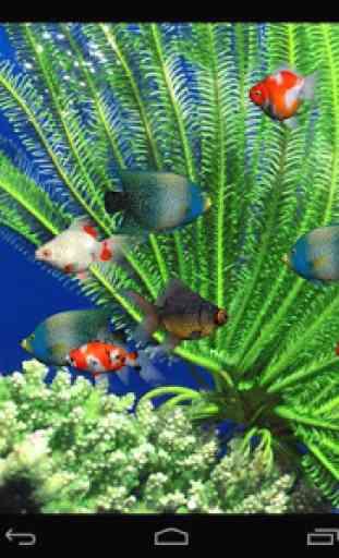 Aquarium Live Wallpaper 4