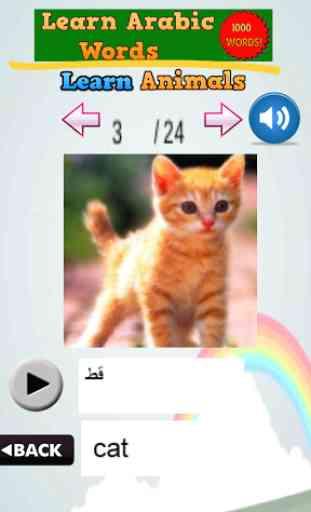 Learn Arabic Words 4