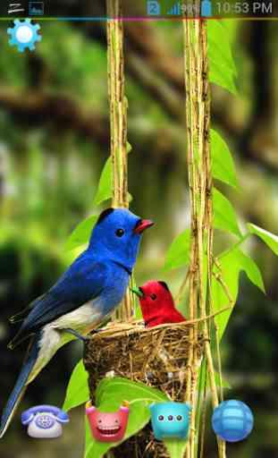 Birds Live Wallpaper 3D 3