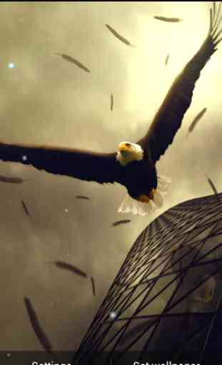 Eagle Live Wallpaper 4