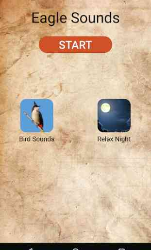 Eagle Sounds and Ringtone 1