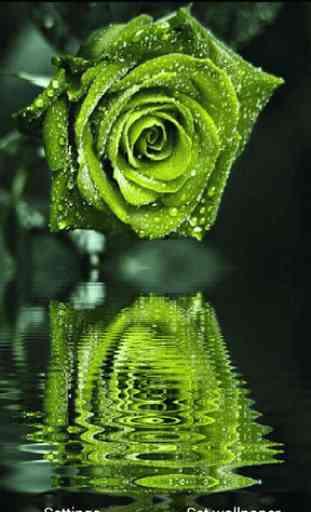 3D Rose Live Wallpaper 3