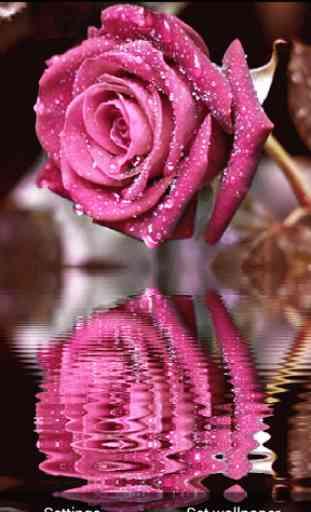 3D Rose Live Wallpaper 4