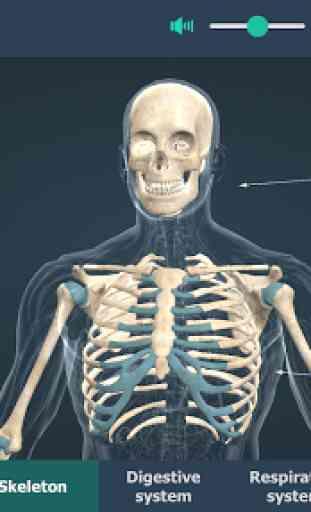Human body (male) educational VR 3D 3