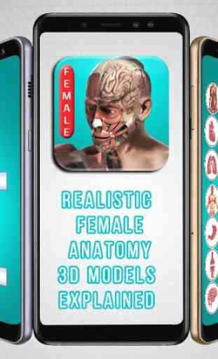 REALISTIC FEMALE ANATOMY 3D MODELS EXPLAINED 1