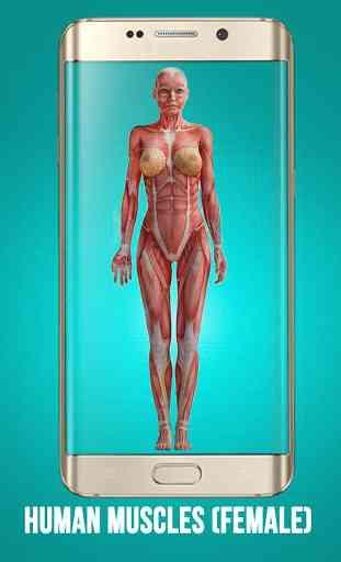 REALISTIC FEMALE ANATOMY 3D MODELS EXPLAINED 3