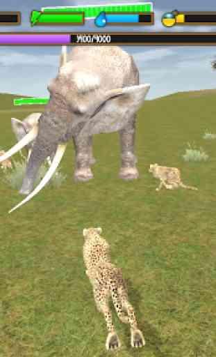 Clan of Cheetahs 4
