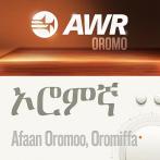 Best Oromo music apps for Android - AllBestApps
